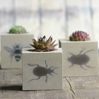 insectpots