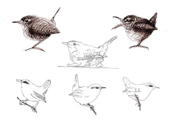Wren sketches