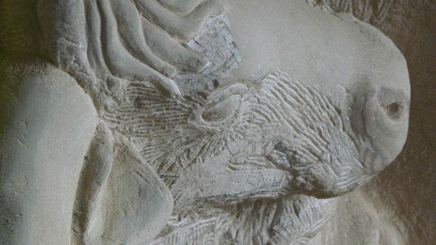 Aurochs carving head detail