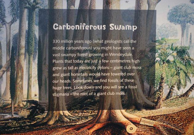 Carboniferous giant moss plants