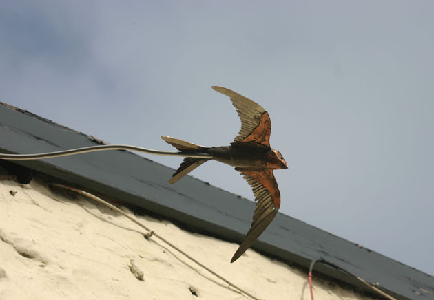 Copper swift sculpture