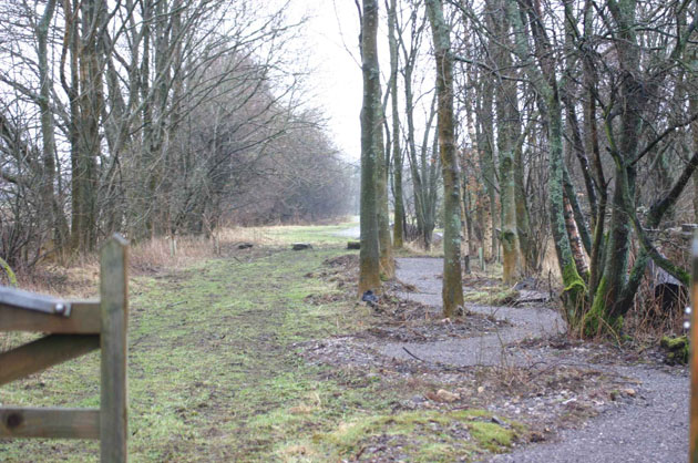 Sculpture Trail - wooded area