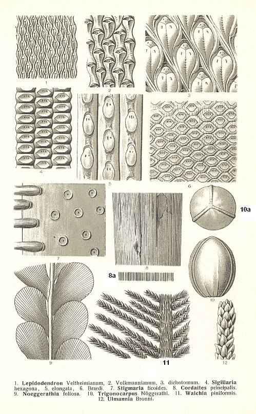 plant shapes inspiring for sculpture