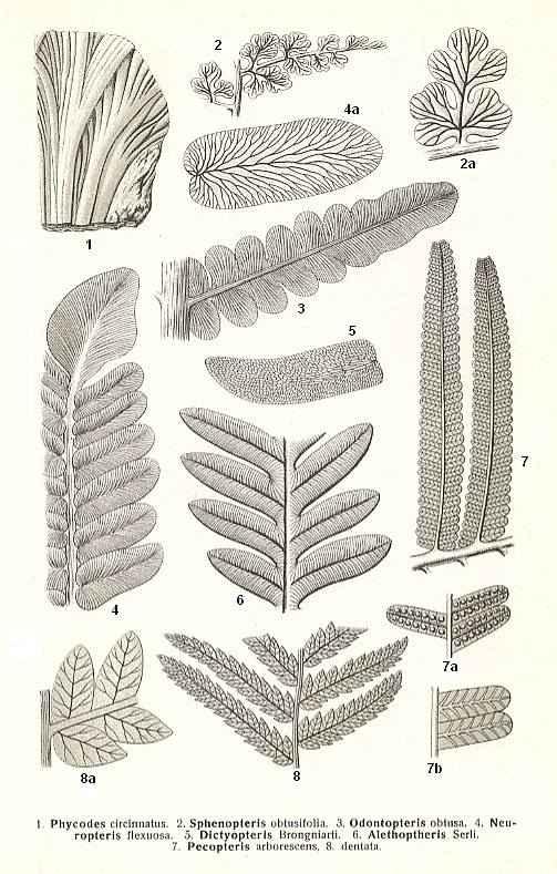 plants to sculpt