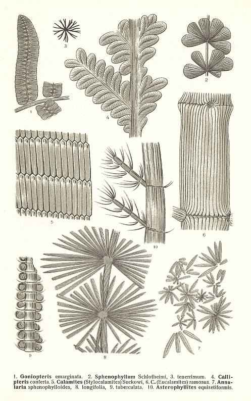 sculptural plant shapes