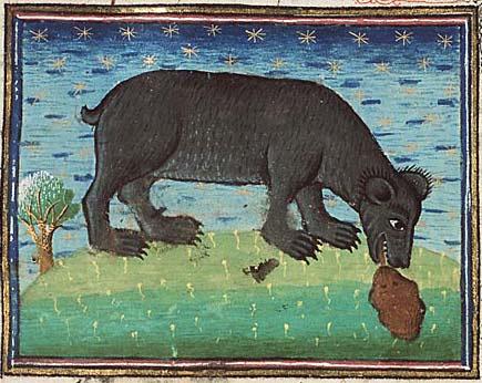 Bear licking cub into shape