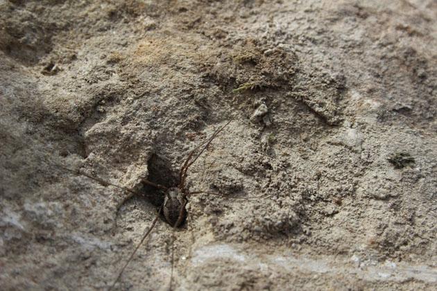 Spider on stone