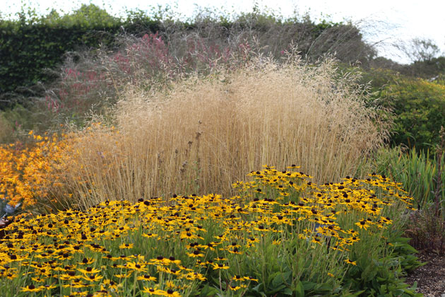Autumn colour and texture at RHS Garden Harlow Carr