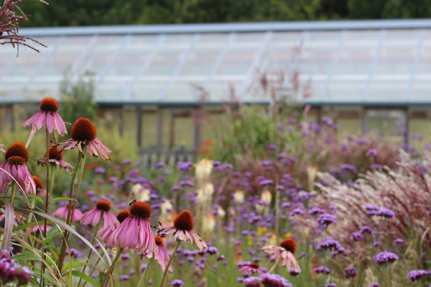 Harlow Carr garden reds and pinks