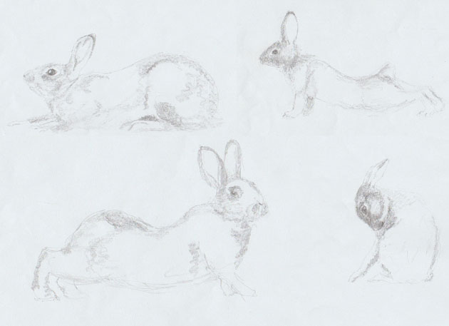 rabbit sketches for sculpture