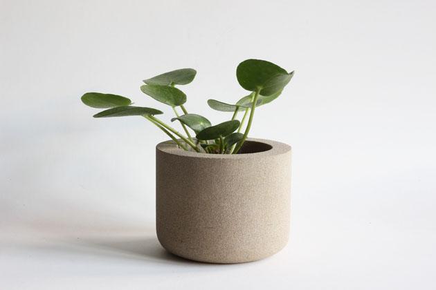 Stone pot with baby Pilea