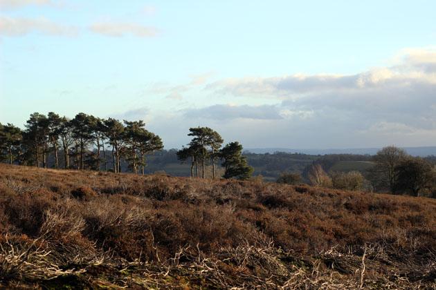 January walk on Lastingham Ridge