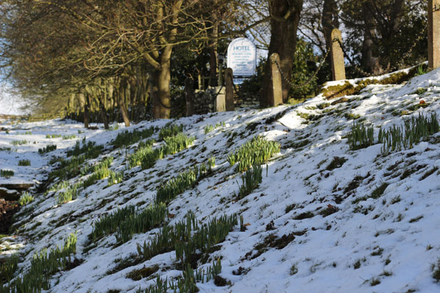 Spring bulbs at the entrance to Lastingham Grange