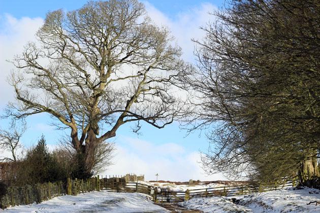 View of the North York Moors from Lastingham Grange, Lastingham