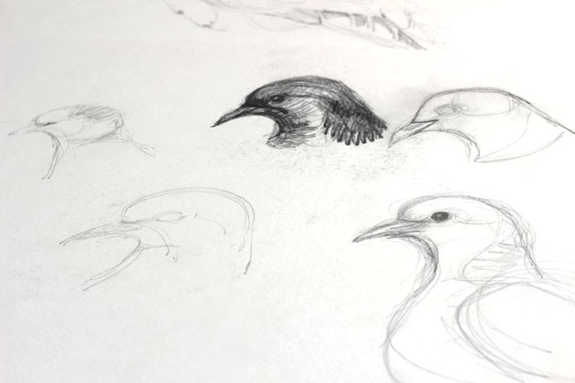 from my sketchbook - dove shapes