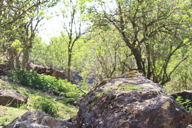 old quarry grown with saplings