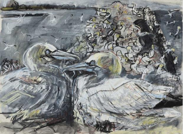 Gannet colony, Bass Rock by Kitty Jones