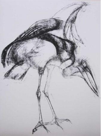 Marabou by Liane Stevenson
