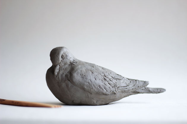 Work in progress - clay Turtle Dove model