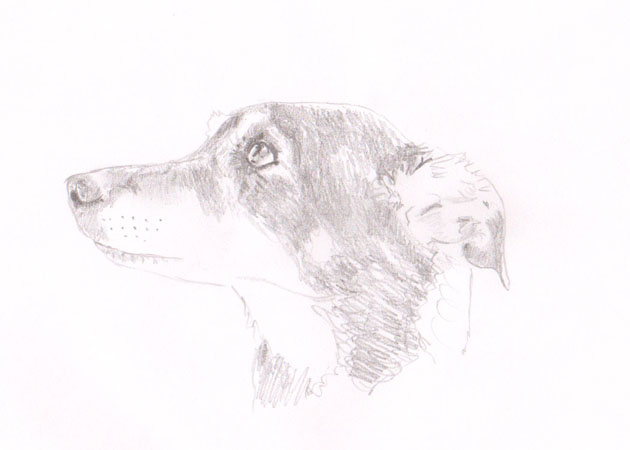 sketch of a dog's head