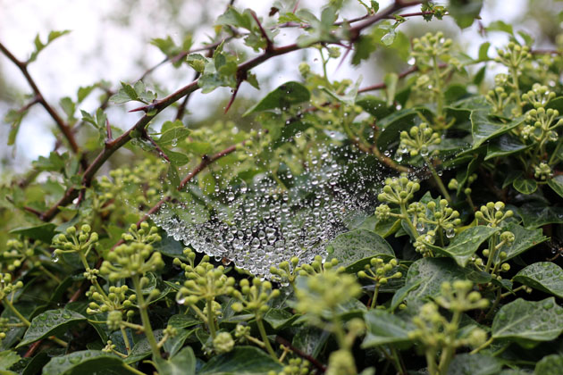 Spider's web with dew drops