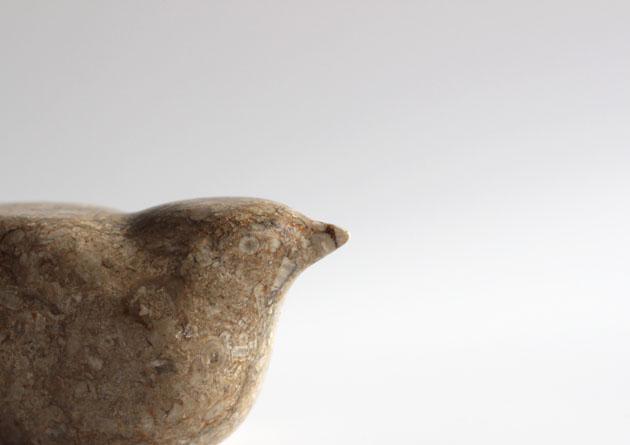 Close up of Fossily Bird
