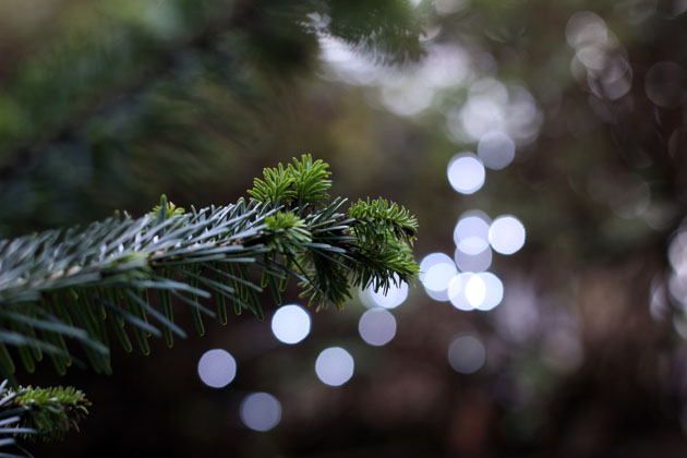 Winter Festival Tree
