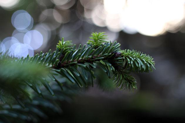 Ode to a Christmas Tree
