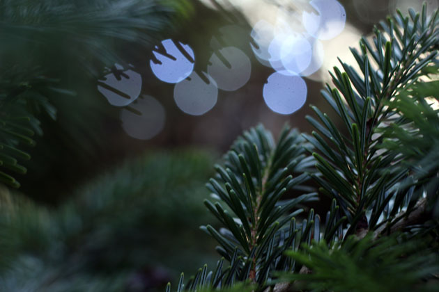 Christmas Tree re-used