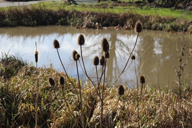 Middleton Village Pond