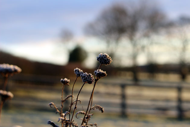 Winter flower stems