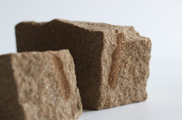 fossil in sandstone