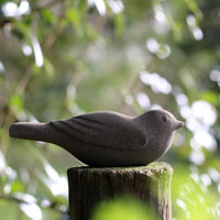 shrubbery bird